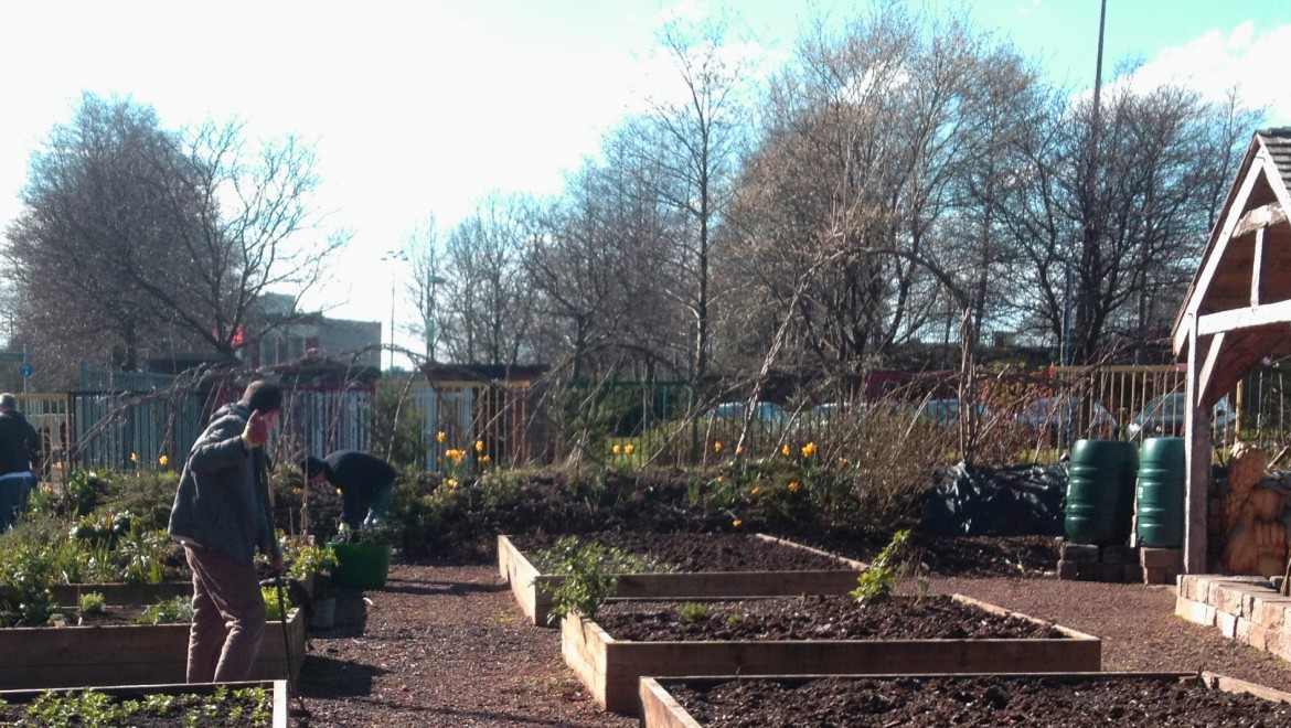 Beautiful and productive places: Glasgow's community gardens and social cohesion